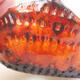 Ceramic shell 7.5 x 7 x 4 cm, color orange - 2/3