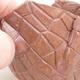 Ceramic shell 10 x 7.5 x 7 cm, brown color - 2/3