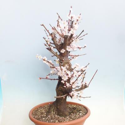 Bonsai bowl 29 x 23 x 8.5 cm, gray-beige color - 2