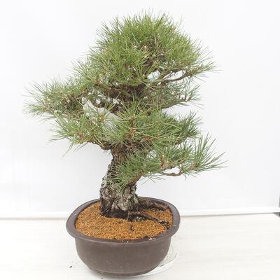 Bonsai bowl 22.5 x 17 x 7 cm, gray-beige color - 2