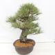 Bonsai bowl 22.5 x 17 x 7 cm, gray-beige color - 2/5