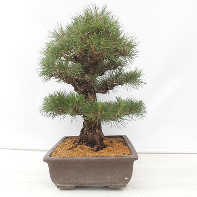 Ceramic bonsai bowl 15.5 x 15.5 x 5 cm, cracked color - 2