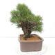 Ceramic bonsai bowl 10.5 x 9 x 4.5 cm, color brown-green - 2/3