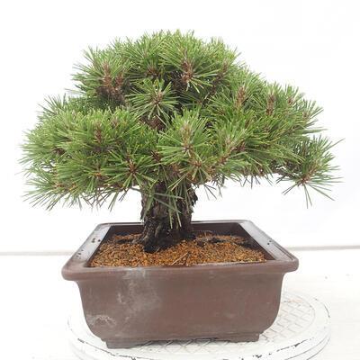 Ceramic bonsai bowl 12 x 11 x 3 cm, color blue - 2