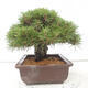Ceramic bonsai bowl 12 x 11 x 3 cm, color blue - 2/3