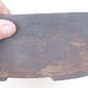 Indoor bonsai - Buxus harlandii - Cork boxwood - 2/7