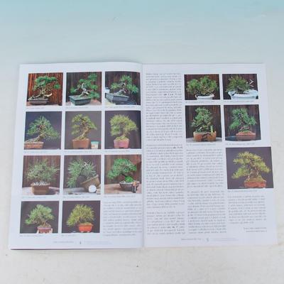 Bonsai and Japanese Garden No.54 - 2