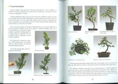 The book not only bonsai in a block of flats - 2