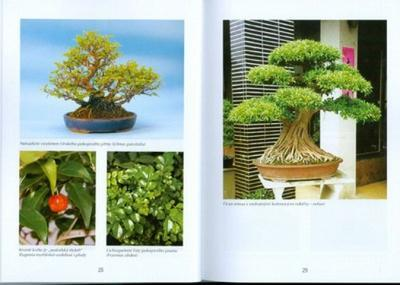 Bonsai trees and gardens, not only in Japan - 2