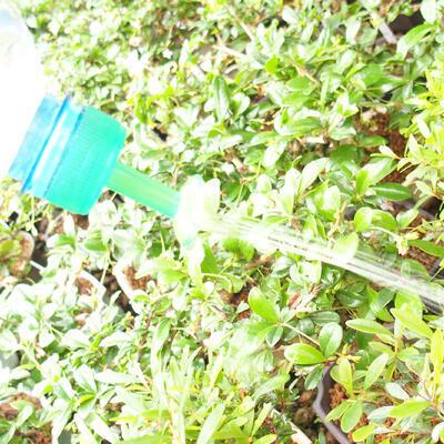 Bonsai sprinkler for PET bottle 5pcs - 2