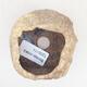 Ceramic shell 5 x 5 x 5 cm, color yellow - 3/3