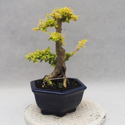Ceramic bonsai bowl 22,5 x 22,5 x 22 cm brown-green color - 3