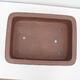 Outdoor bonsai -Malus Halliana - fruited apple - 3/4