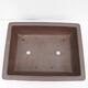 Outdoor bonsai -Malus Halliana - fruited apple - 3/5