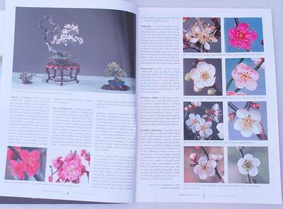 Bonsai and Japanese Garden No.49 - 3