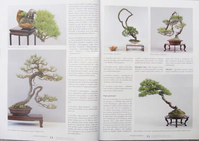 Bonsai and Japanese Garden No.51 - 3