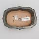 Outdoor bonsai -Carpinus CARPINOIDES - Korean Hornbeam - 3/4