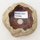 Ceramic shell 6 x 6 x 4.5 cm, color brown-green - 3/3