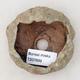Ceramic Shell 6 x 5.5 x 4.5 cm, color brown-green - 3/3
