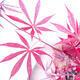 Outdoor bonsai - Acer palm. Atropurpureum-Red palm leaf - 3/3