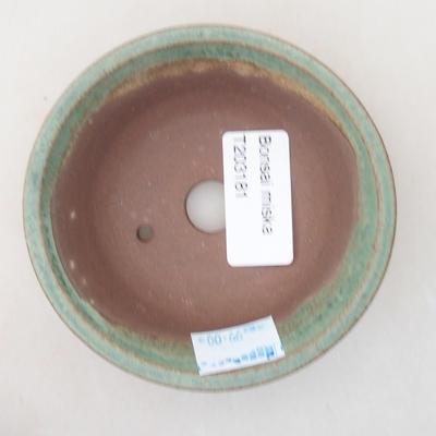 Indoor bonsai - Casuarina equisetifolia- Horsetail - 3