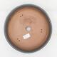 Outdoor bonsai - Satureja mountain - Satureja montana - 3/6