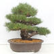 Bonsai bowl 22 x 17 x 7 cm, gray-beige color - 3/5