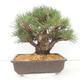 Ceramic bonsai bowl 10.5 x 9 x 4.5 cm, color brown-green - 3/3