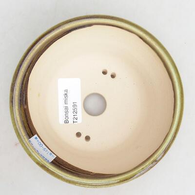 Outdoor bonsai -Malus Halliana - fruited apple - 3