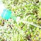 Bonsai sprinkler for PET bottle 20pcs - 3/5