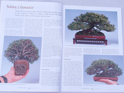 Bonsai and Japanese Garden No.48 - 4