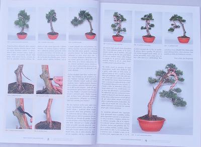 Bonsai and Japanese Garden No.49 - 4