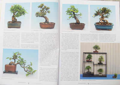 Bonsai and Japanese Garden No.52 - 4