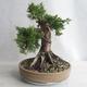 Outdoor bonsai - Juniperus chinensis - Chinese juniper - 4/5