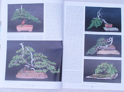 Bonsai and Japanese Garden No.49 - 5