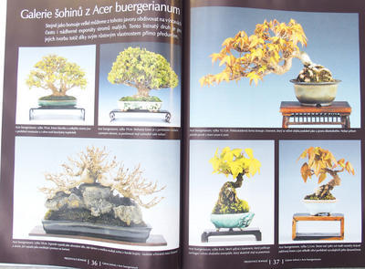 Bonsai and Japanese Garden No.51 - 5