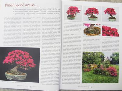 Bonsai and Japanese Garden No.52 - 5