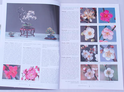 Bonsai and Japanese Garden No.49 - 6