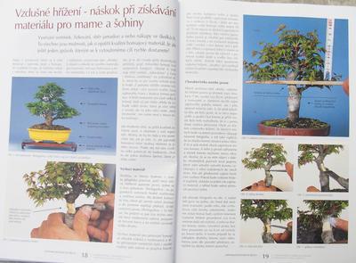 Bonsai and Japanese Garden No.52 - 6