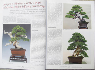 Bonsai and Japanese Garden No.52 - 7